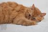 Cat_Calendar-0157