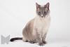 Cat_Calendar-0017