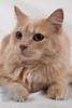 Cat_Calendar-0146