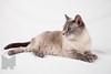 Cat_Calendar-0030