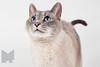 Cat_Calendar-0023