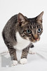 Cat_Calendar-0005