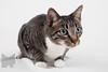 Cat_Calendar-0007