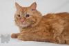 Cat_Calendar-0156