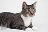 Cat_Calendar-0013