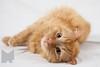 Cat_Calendar-0167