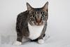 Cat_Calendar-0001