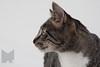Cat_Calendar-0004