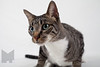 Cat_Calendar-0008