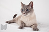 Cat_Calendar-0020