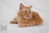 Cat_Calendar-0153