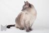Cat_Calendar-0015
