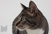 Cat_Calendar-0003