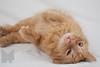 Cat_Calendar-0152