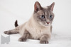 Cat_Calendar-0019