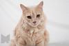 Cat_Calendar-0148