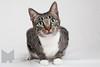 Cat_Calendar-0009