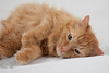 Cat_Calendar-0159