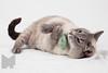 Cat_Calendar-0018