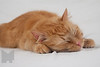Cat_Calendar-0161