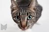 Cat_Calendar-0010