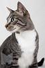 Cat_Calendar-0011