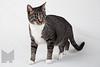 Cat_Calendar-0006