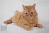 Cat_Calendar-0165