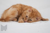 Cat_Calendar-0160
