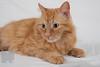 Cat_Calendar-0164