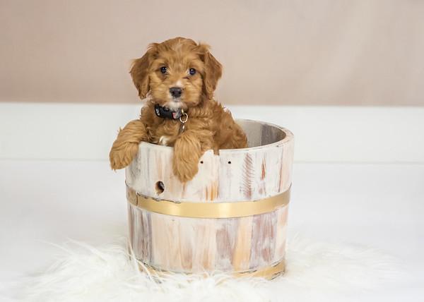 Prisca Puppy-1-10