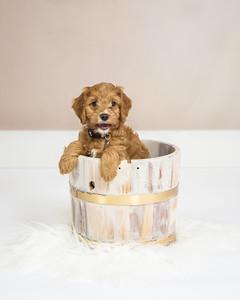 Prisca Puppy-1-9