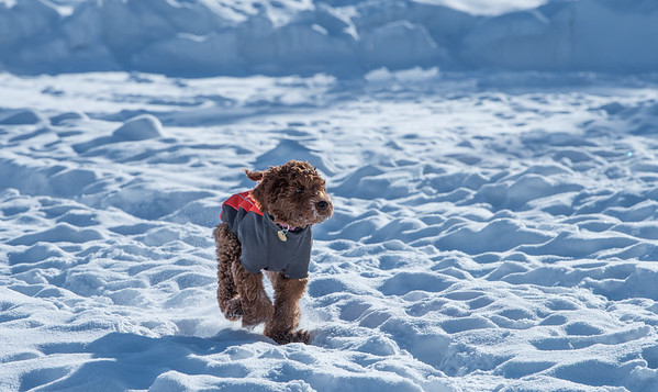 121-LakeLouise-2018 030 feb misc+puppy-0892-Edit