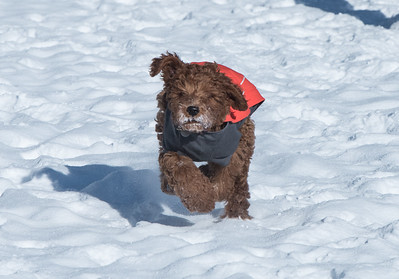 117-LakeLouise-2018 030 feb misc+puppy-0870