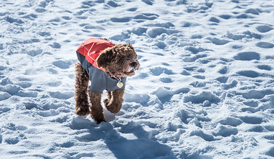 101-LakeLouise-2018 030 feb misc+puppy-0820