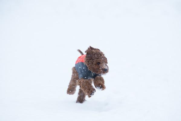 207-LLGrp3HR-2018 032 mar2nd puppy-0954
