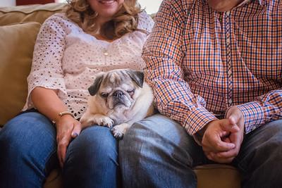 15_Henry the super dog