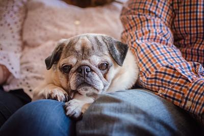 16_Henry the super dog
