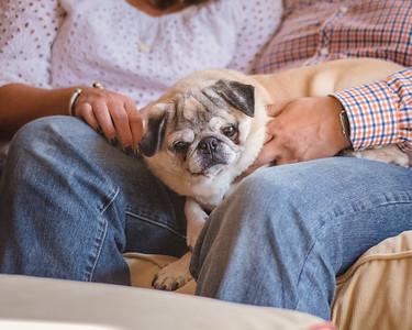 8_Henry the super dog