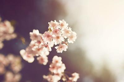 Spring 2015_3