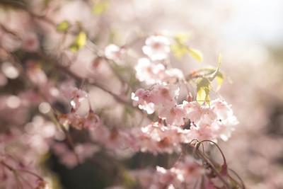 Spring 2015_2