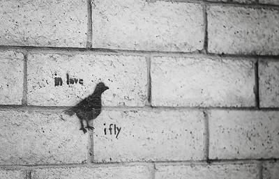Wall Bird_1