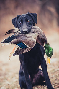 FowlWater Outdoors-0013