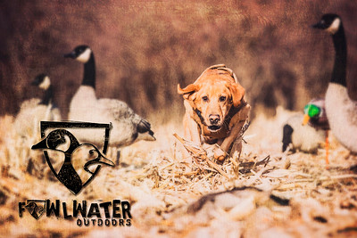 FowlWater - 03