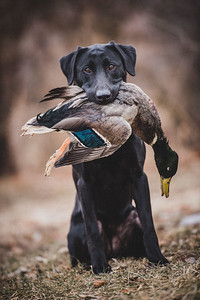 FowlWater Outdoors-0014