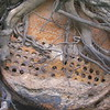 Unkonwn Boiler in Altmaha River Bank