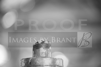 Gasworks_Park_Yelm_Wedding_Photographers_011_DSC_4807-2