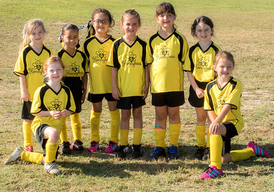 Honey bees team photo
