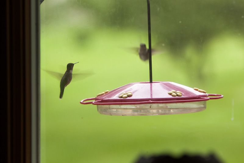 Hummers-2