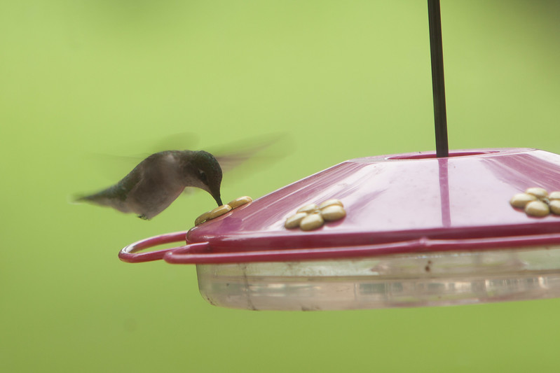 Hummers-3
